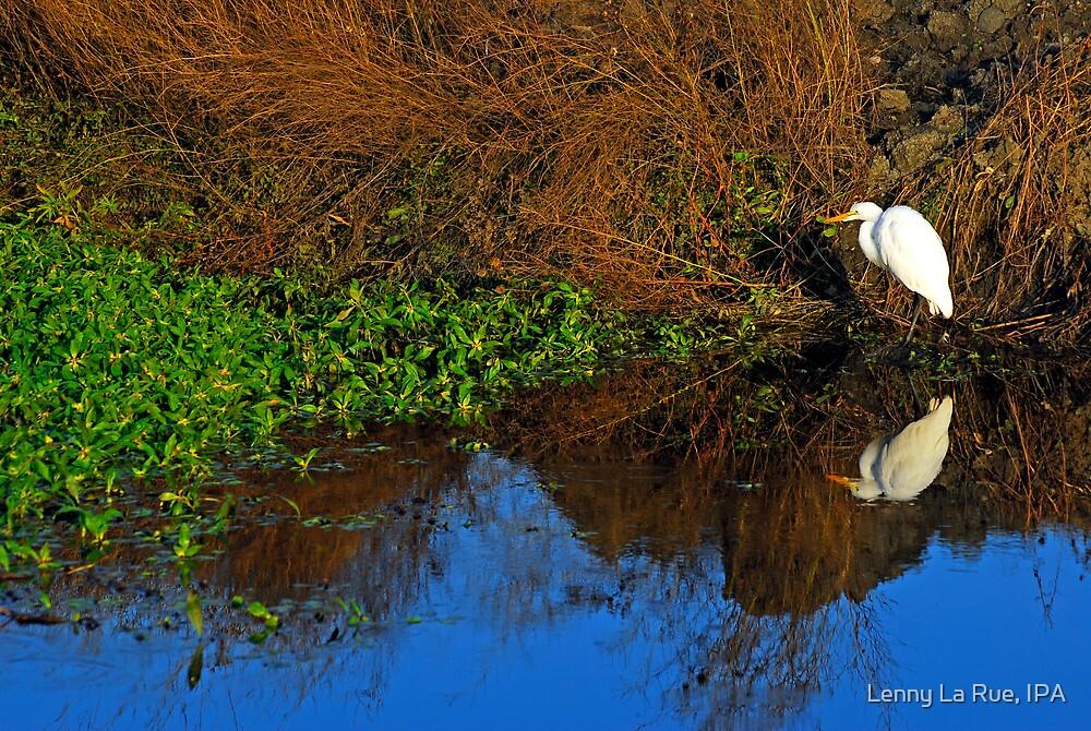 wetlands egret reflected by Lenny La Rue, IPA