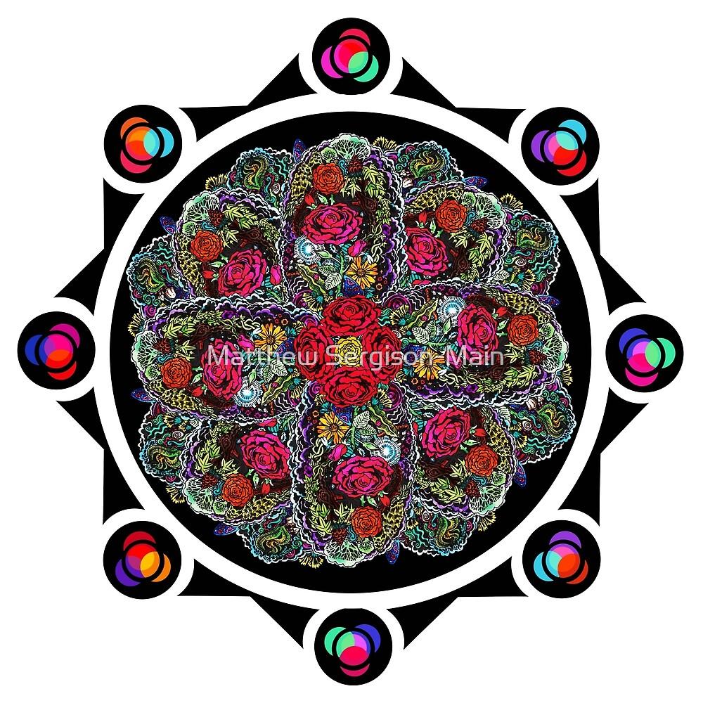 8 Rose Window by Matthew Sergison-Main