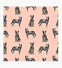 Australian Cattle Dog blue heeler dog breed gifts for cattle dog owners Photographic Print