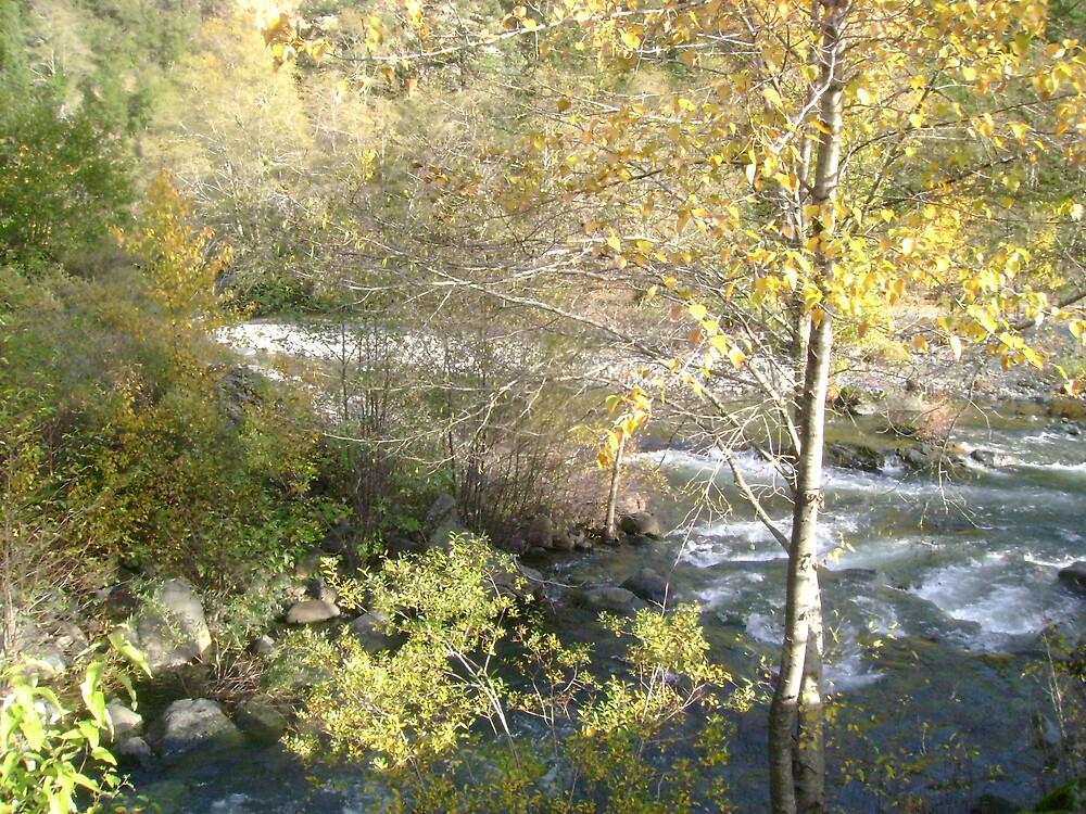 A River Peeks Thru by Sheri Scherbarth