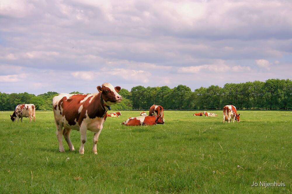 Hi Cow! by Jo Nijenhuis