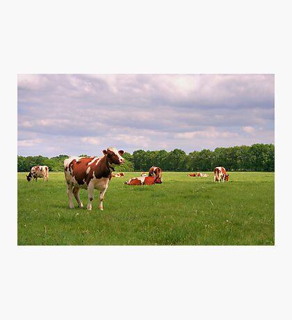 Hi Cow! Photographic Print