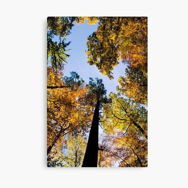 Herbstwipfel Leinwanddruck