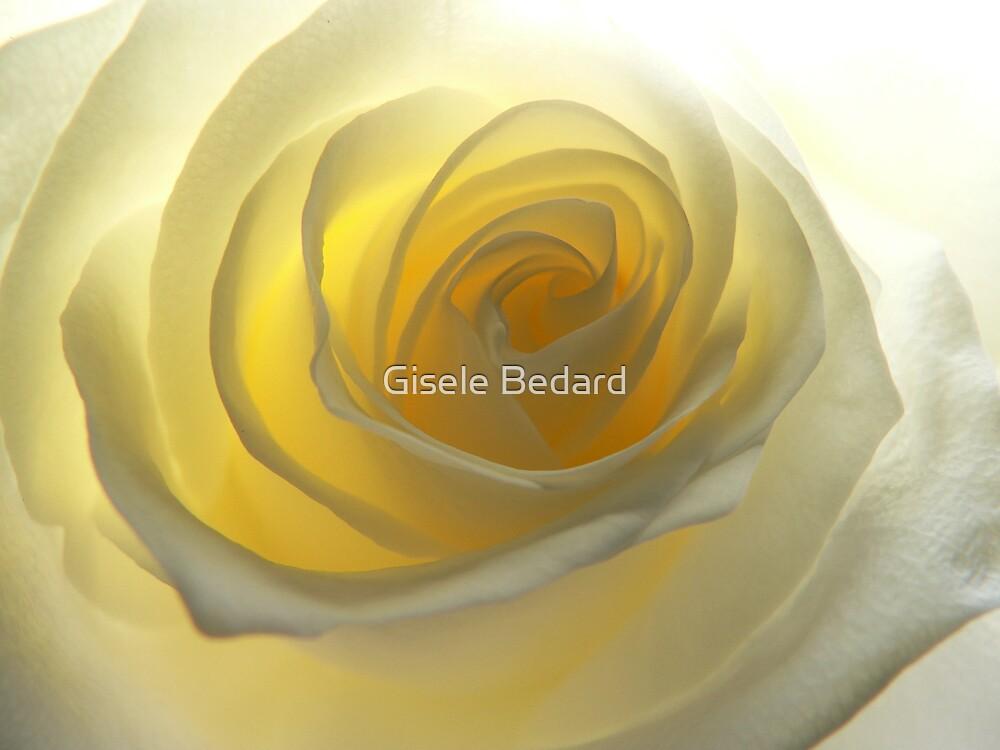 Pale Yellow Rose by Gisele Bedard