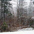 Let It Snow, let it snow ... by Diane Rodriguez