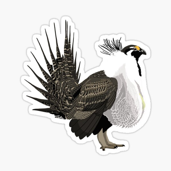 Greater Sage-Grouse (support the Bird Conservancy of the Rockies) Sticker