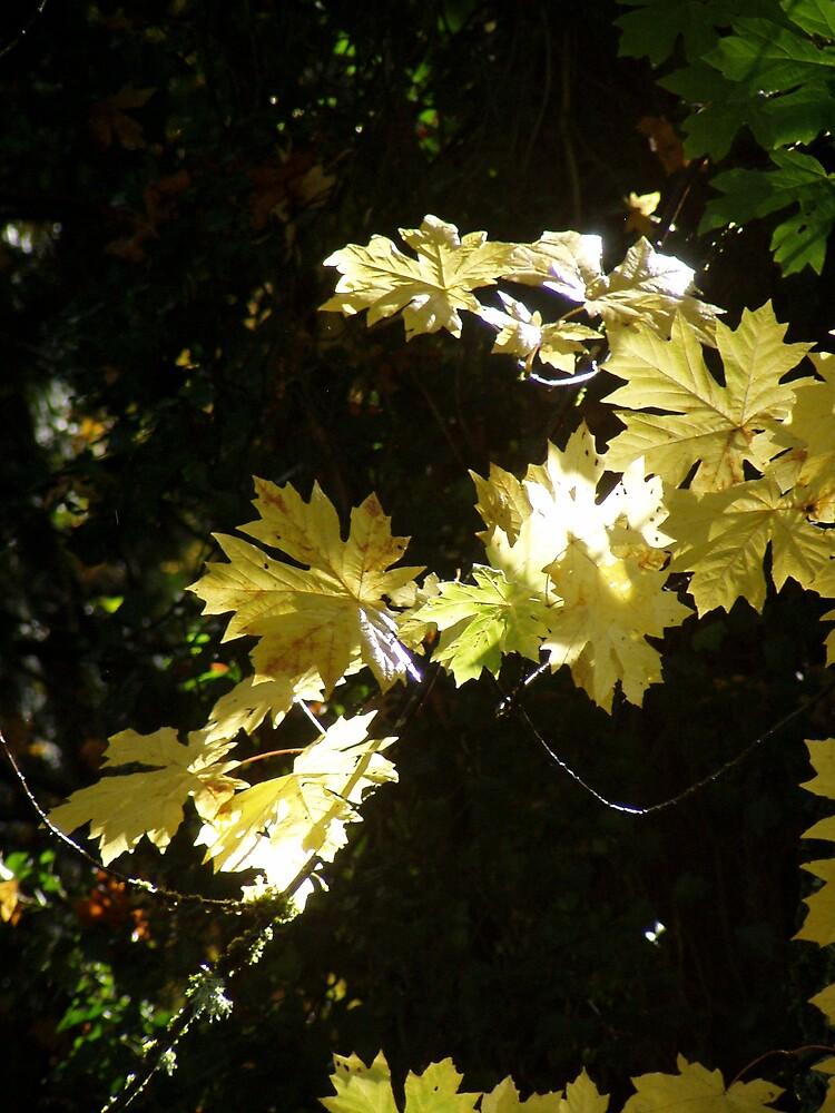 Autumn Sun Rays #7 by Dawna Morton