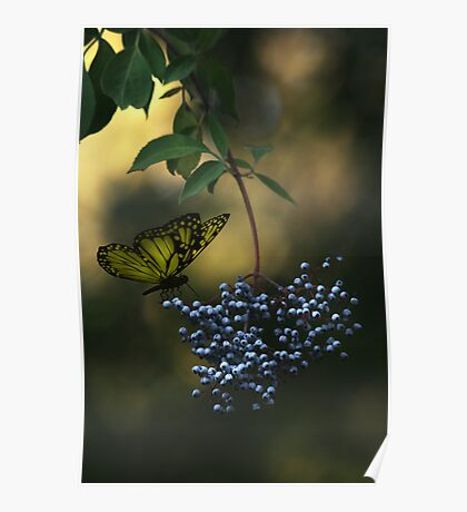 Natures little secret Poster