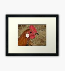 Rare Breed Rooster Framed Print