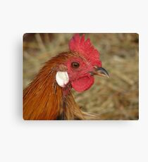 Rare Breed Rooster Canvas Print