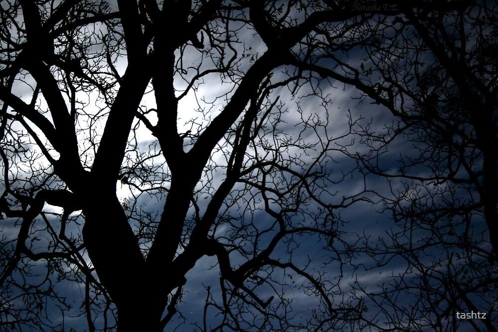 Long Way To Darkness by tashtz