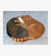 Ball of Cuteness Photographic Print