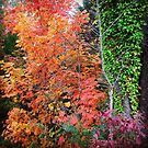 Autumn's Vibrancy by Rodney Lee Williams