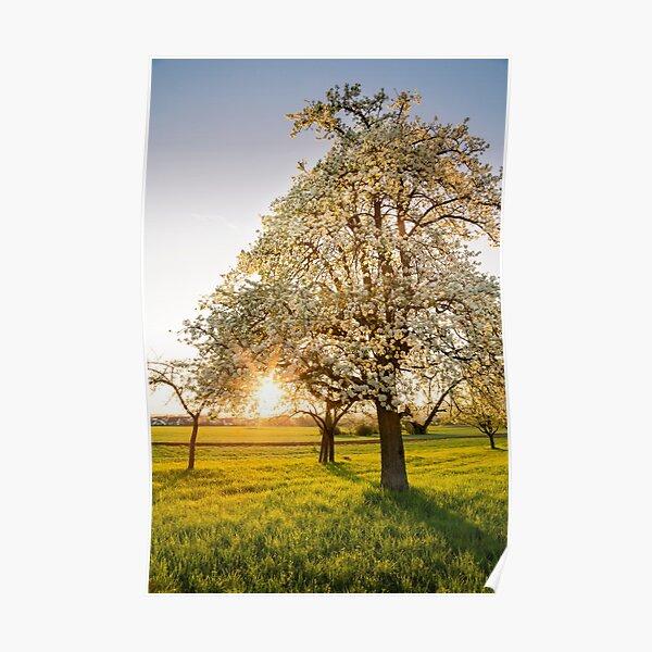 Frühlingssonne I Poster