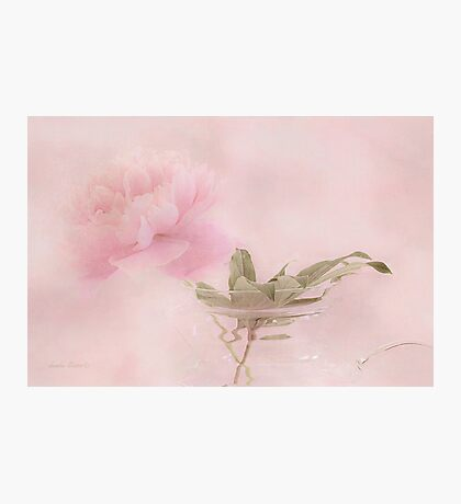 Pink Peony Blossom In Clear Glass Tea Pot  Photographic Print