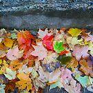 Rainy Autumn Morning 2 by Rodney Lee Williams