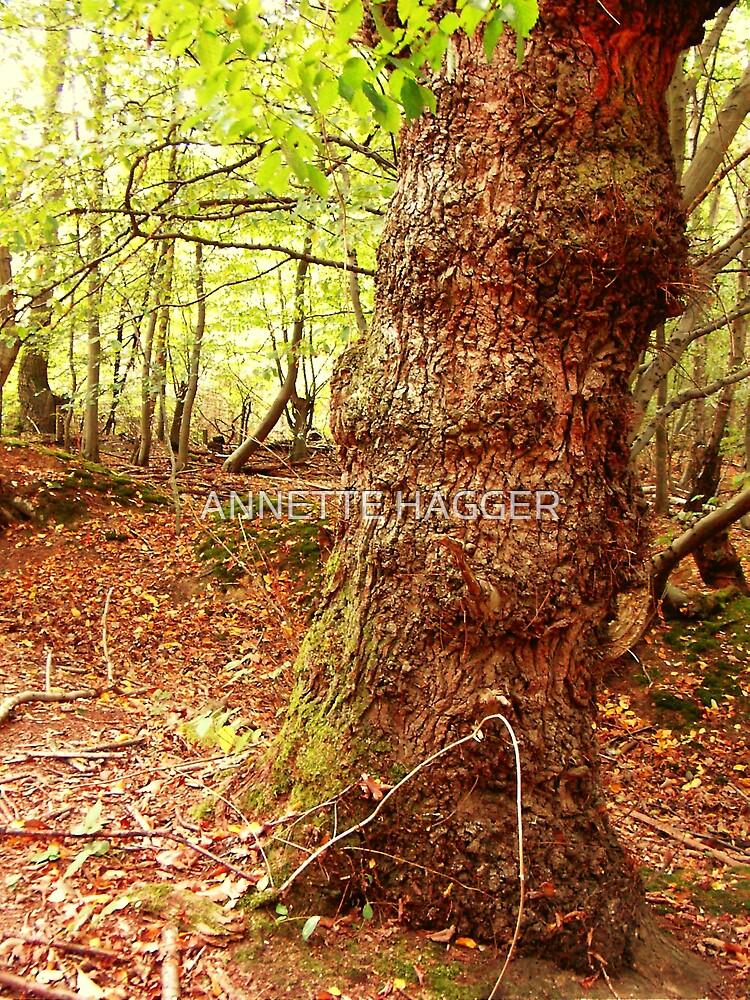 Danbury Wood Essex.  by ANNETTE HAGGER