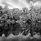 Blackwood by Nathan  Johnson