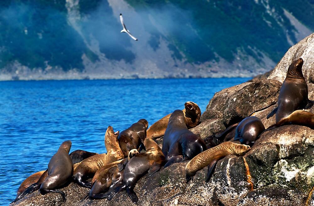 Seals Sunbathing by dbschanck