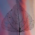 Leaf Skeleton  by Simon-dell