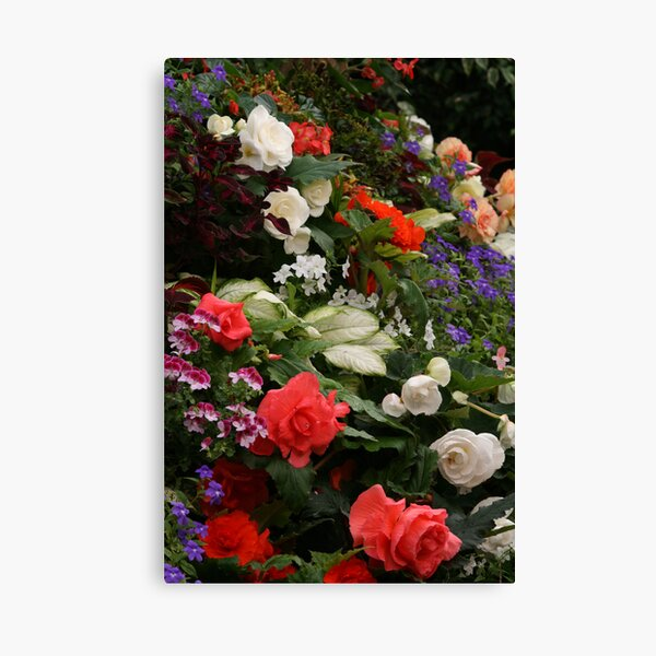 Begonia's Canvas Print