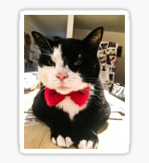 Leroy my cat  Sticker