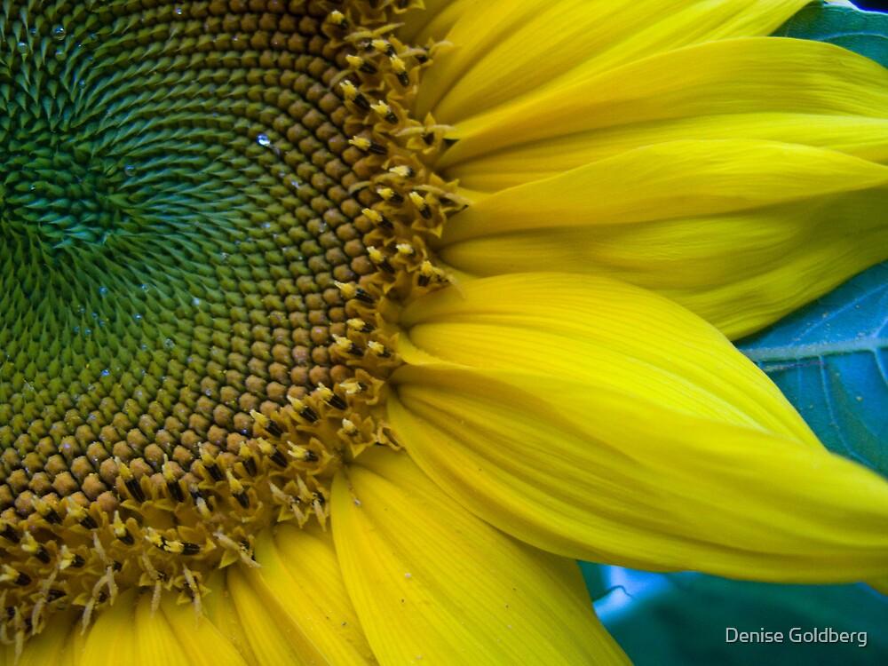 Sunflower smiles by Denise Goldberg