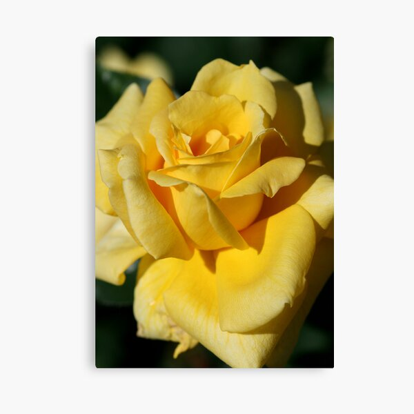 Rose Canvas Print