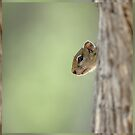 Squirrel - Ardilla - Ecureuil by Yves Roumazeilles