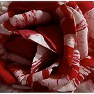 Striped Roses by Jason Dymock Photography