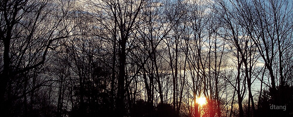 Sunrise in Trees by dtang