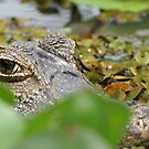 Caiman by Yves Roumazeilles