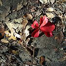 A Single Red Leaf by Glenna Walker