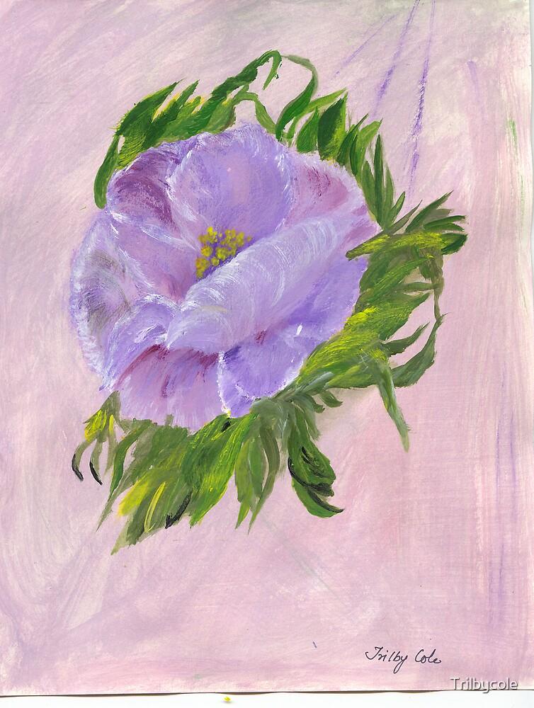 The Purple Poppy by Trilbycole