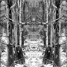Mirror Tree 1 by somewherestudio