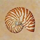 Nautilus Sea Shell in Pastel by Fiona Cross