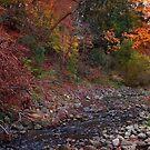 Autumn creek by MarianBendeth