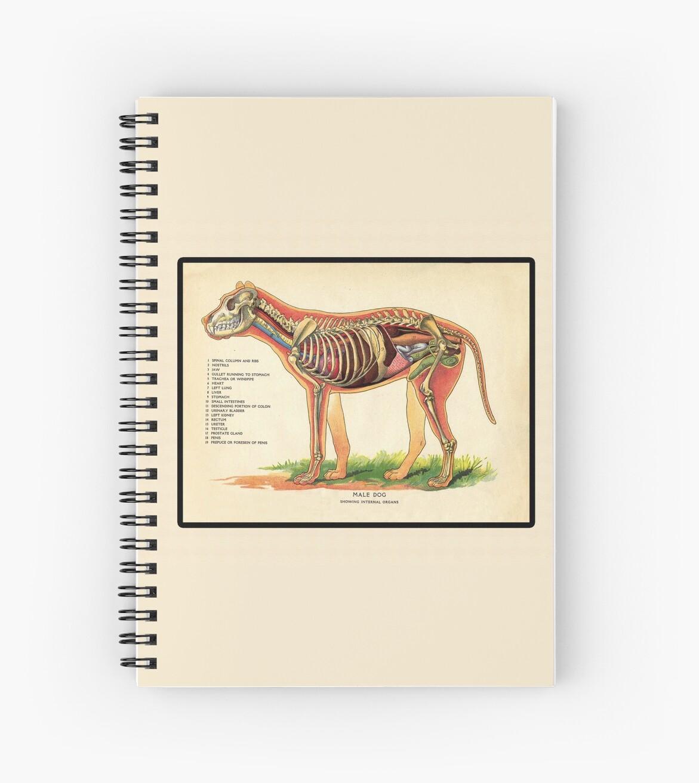 Vintage Veterinary School Dog Anatomy Chart\