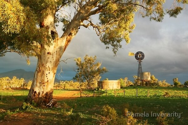 River Red Gum and Windmill by Pamela Inverarity