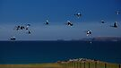 Birds on the Wing. by Garth Smith