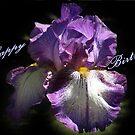 Purple Birthday Iris by Bev Pascoe