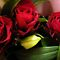 *Feature Page/Three Red Roses - Enchanted Flowers