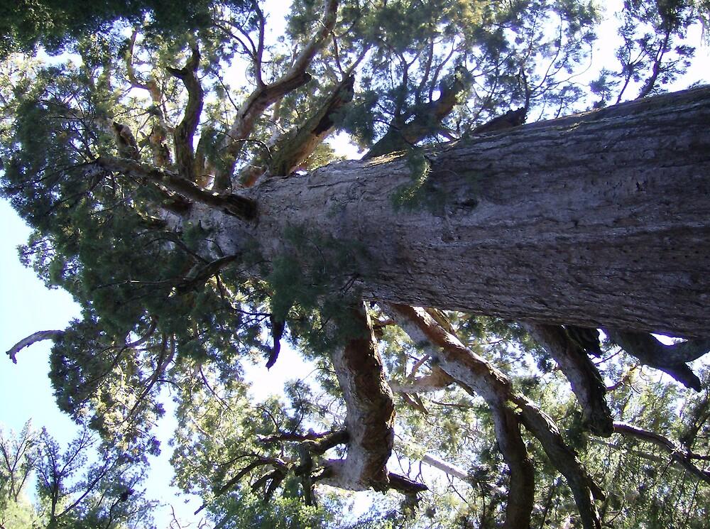 tree by blueskye303