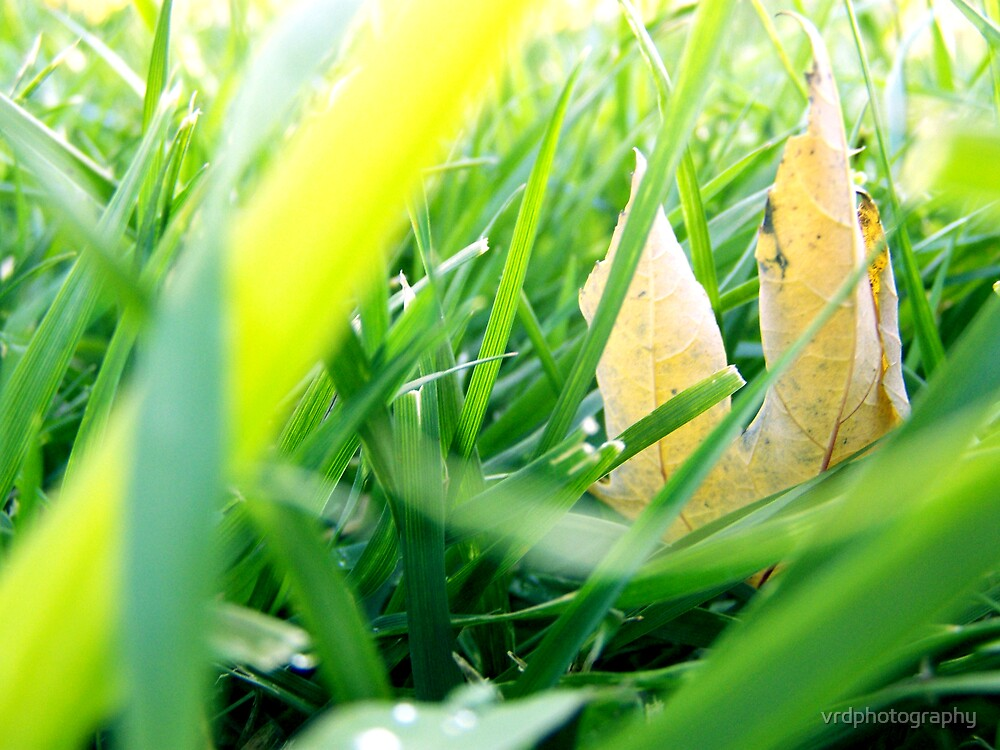 Hidden Autumn Treasure by vrdphotography