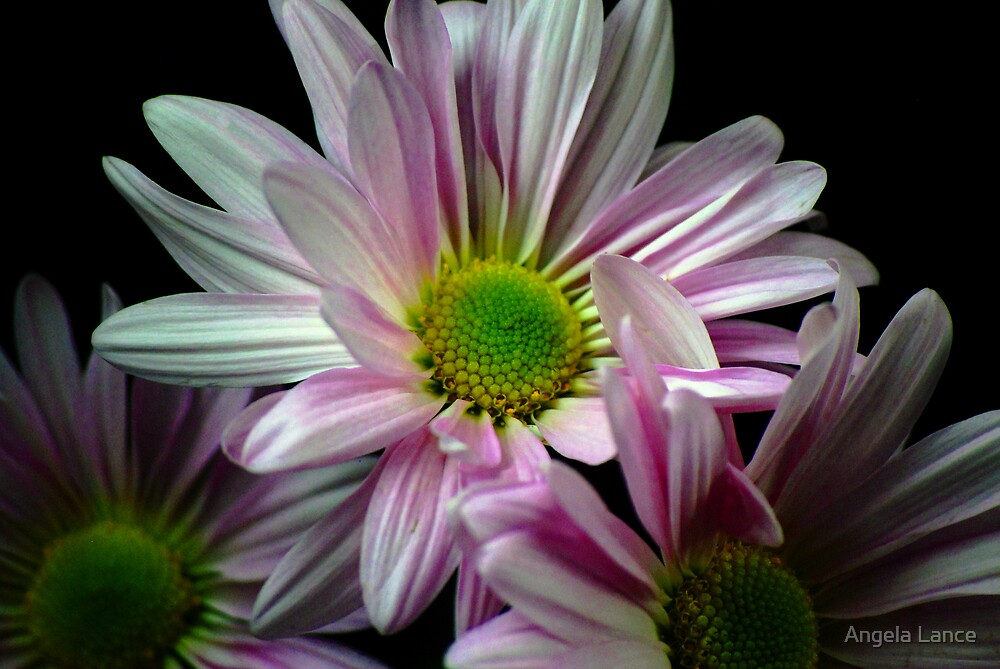 Purple & White Petals.....  by Angela Lance