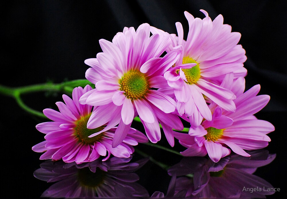 Purple Daisies by Angela Lance