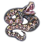 Gaboon viper snake design on white by Marion Yeo