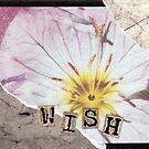 Wish by evapod