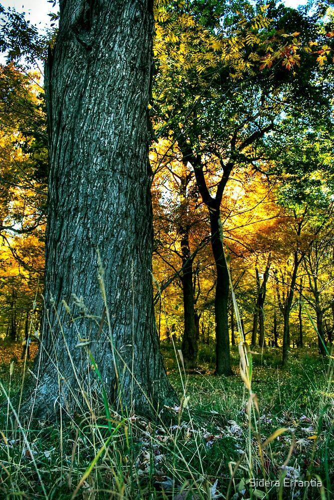 A Forest by Sidera Errantia