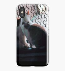 Two Kittens in a Big World  iPhone Case/Skin
